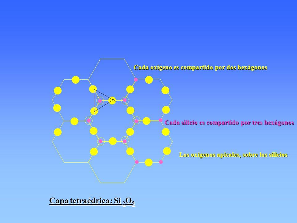 Capa tetraédrica: Si 2O5 Cada oxígeno es compartido por dos hexágonos