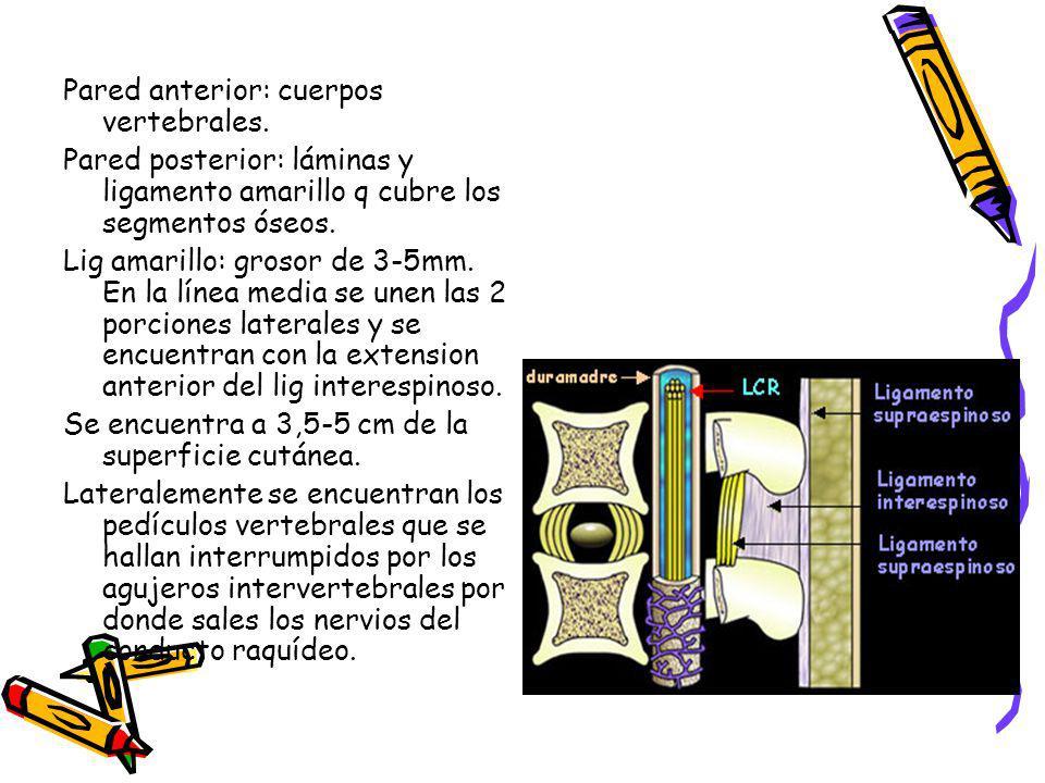 Pared anterior: cuerpos vertebrales.