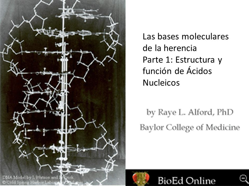 Las bases moleculares de la herencia