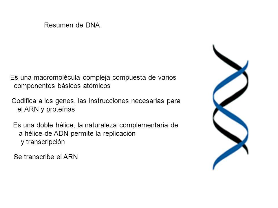 Resumen de DNA Es una macromolécula compleja compuesta de varios. componentes básicos atómicos.