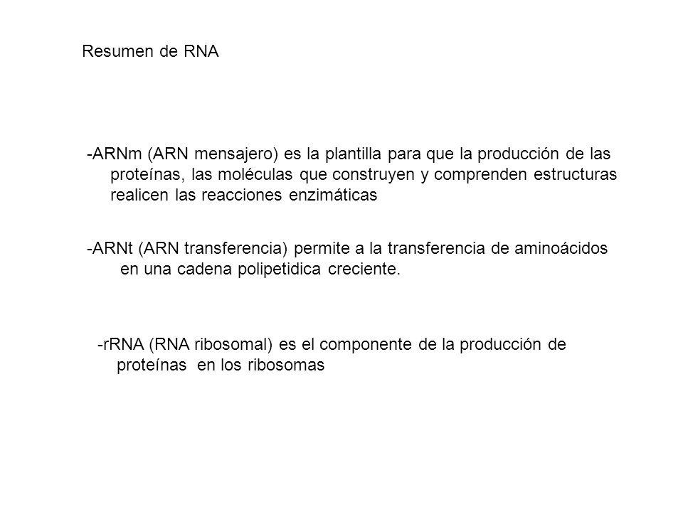 Resumen de RNA ARNm (ARN mensajero) es la plantilla para que la producción de las. proteínas, las moléculas que construyen y comprenden estructuras.