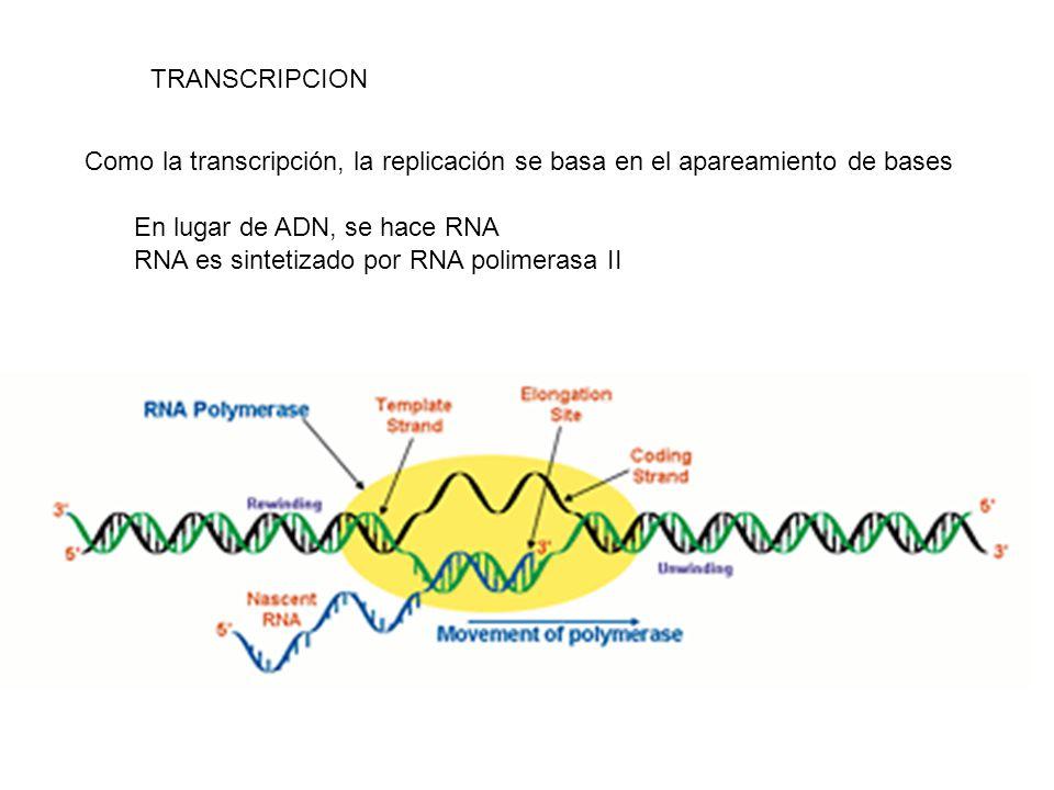 TRANSCRIPCION Como la transcripción, la replicación se basa en el apareamiento de bases. En lugar de ADN, se hace RNA.