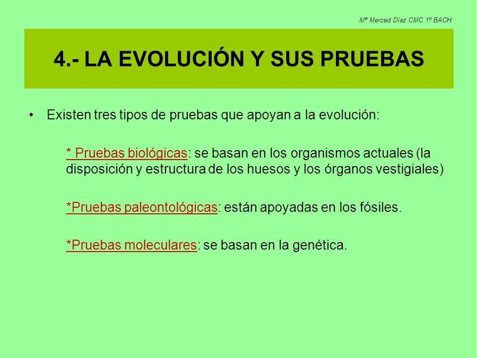 4.- LA EVOLUCIÓN Y SUS PRUEBAS