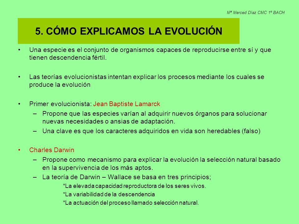 5. CÓMO EXPLICAMOS LA EVOLUCIÓN