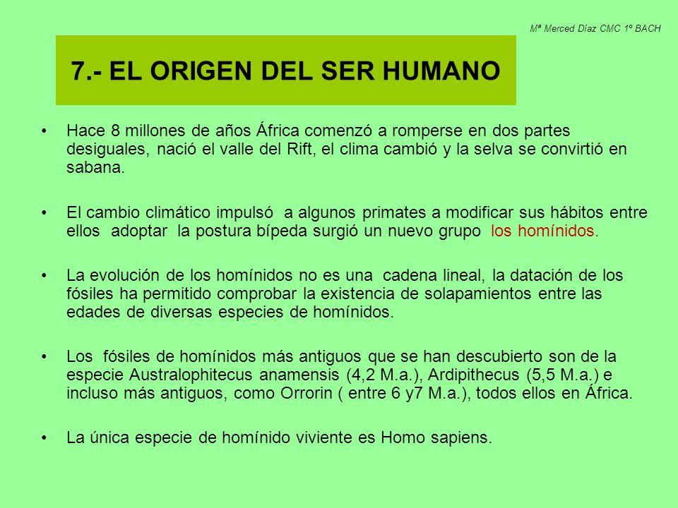 7.- EL ORIGEN DEL SER HUMANO