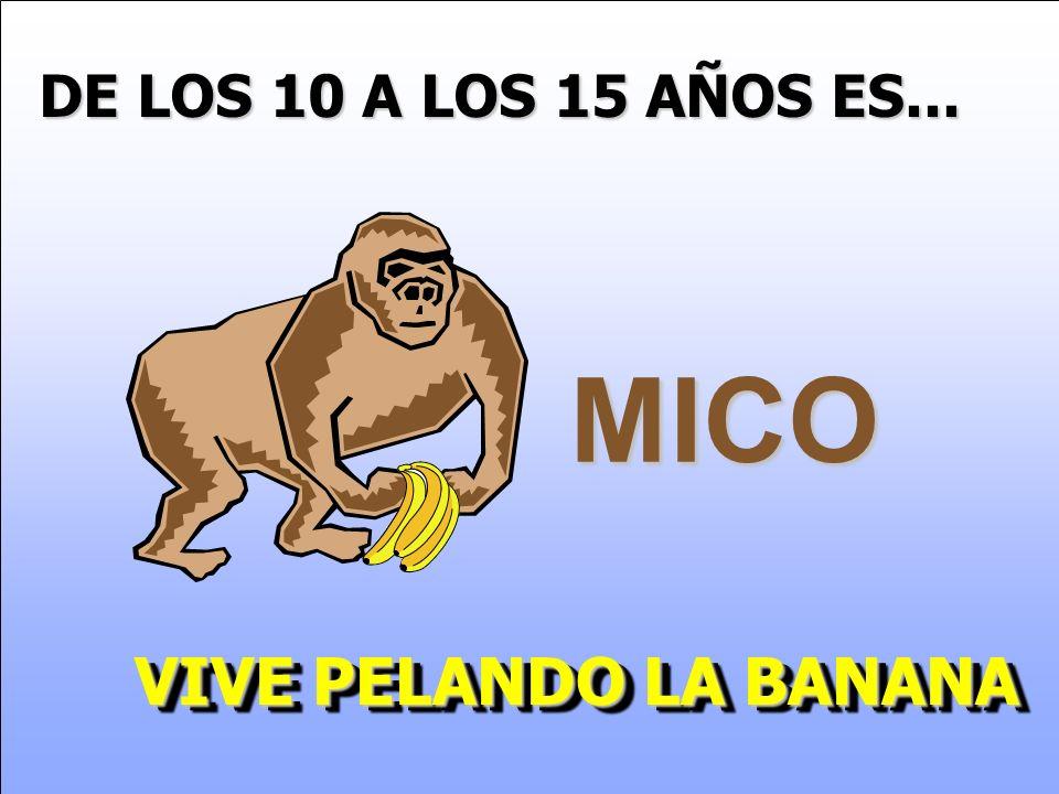 DE LOS 10 A LOS 15 AÑOS ES... MICO VIVE PELANDO LA BANANA