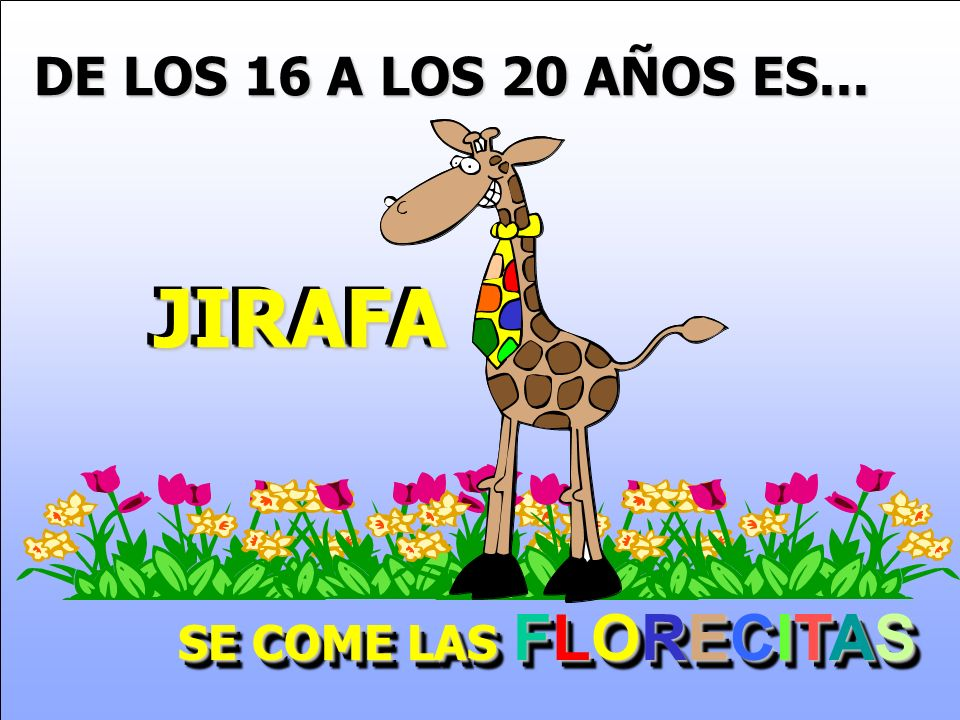 DE LOS 16 A LOS 20 AÑOS ES... JIRAFA SE COME LAS FLORECITAS