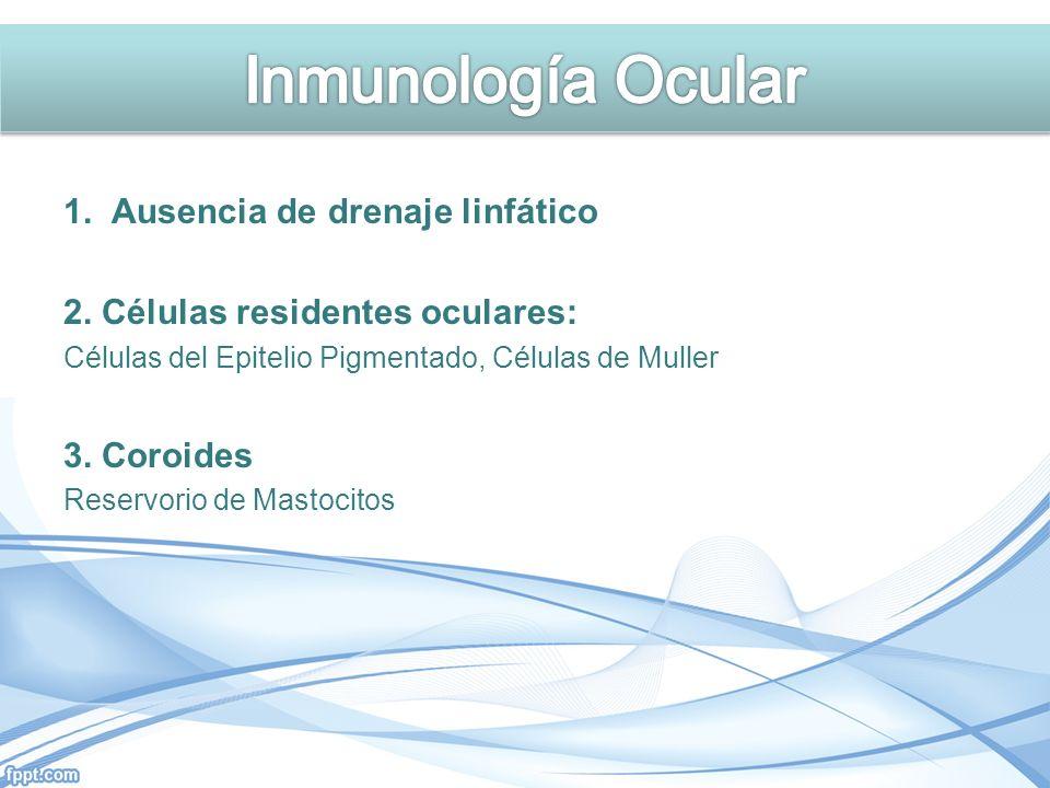 Inmunología Ocular 1. Ausencia de drenaje linfático