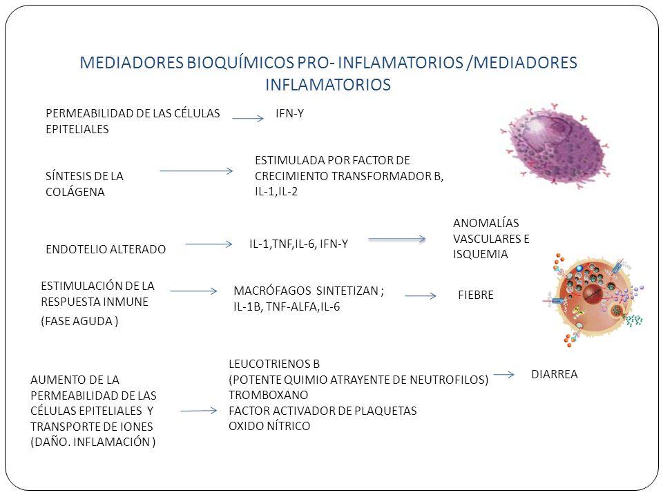MEDIADORES BIOQUÍMICOS PRO- INFLAMATORIOS /MEDIADORES INFLAMATORIOS