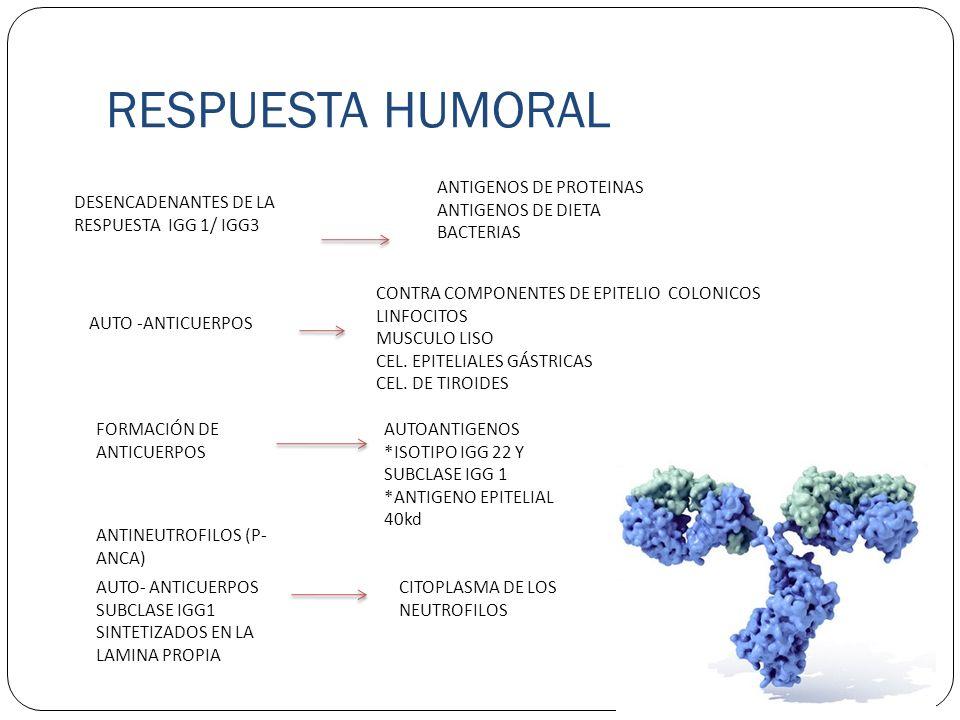 RESPUESTA HUMORAL ANTIGENOS DE PROTEINAS ANTIGENOS DE DIETA BACTERIAS
