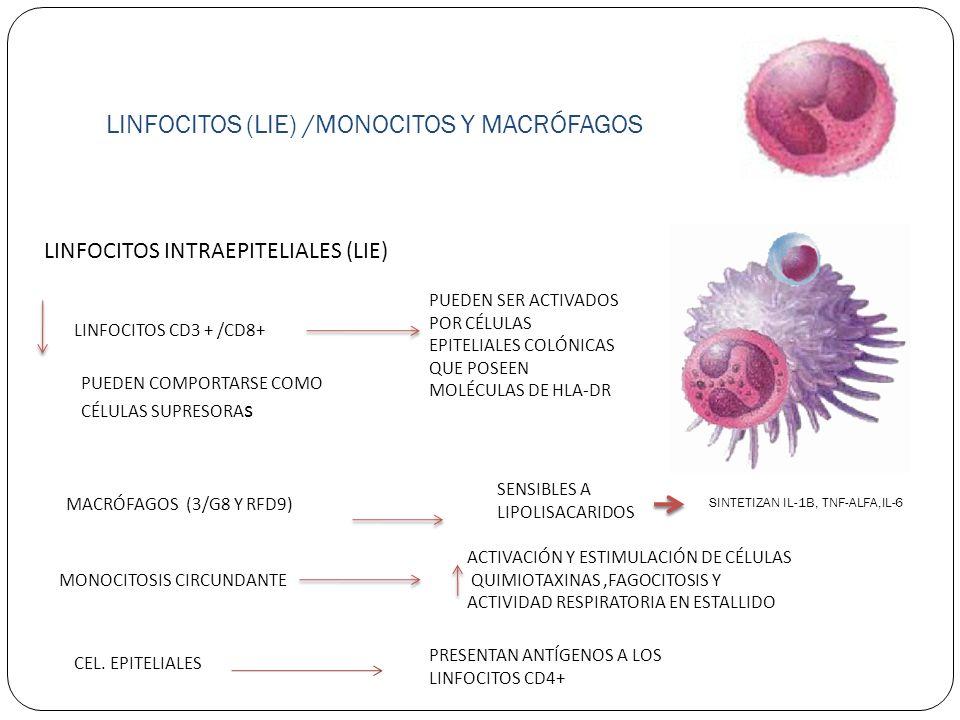 LINFOCITOS (LIE) /MONOCITOS Y MACRÓFAGOS