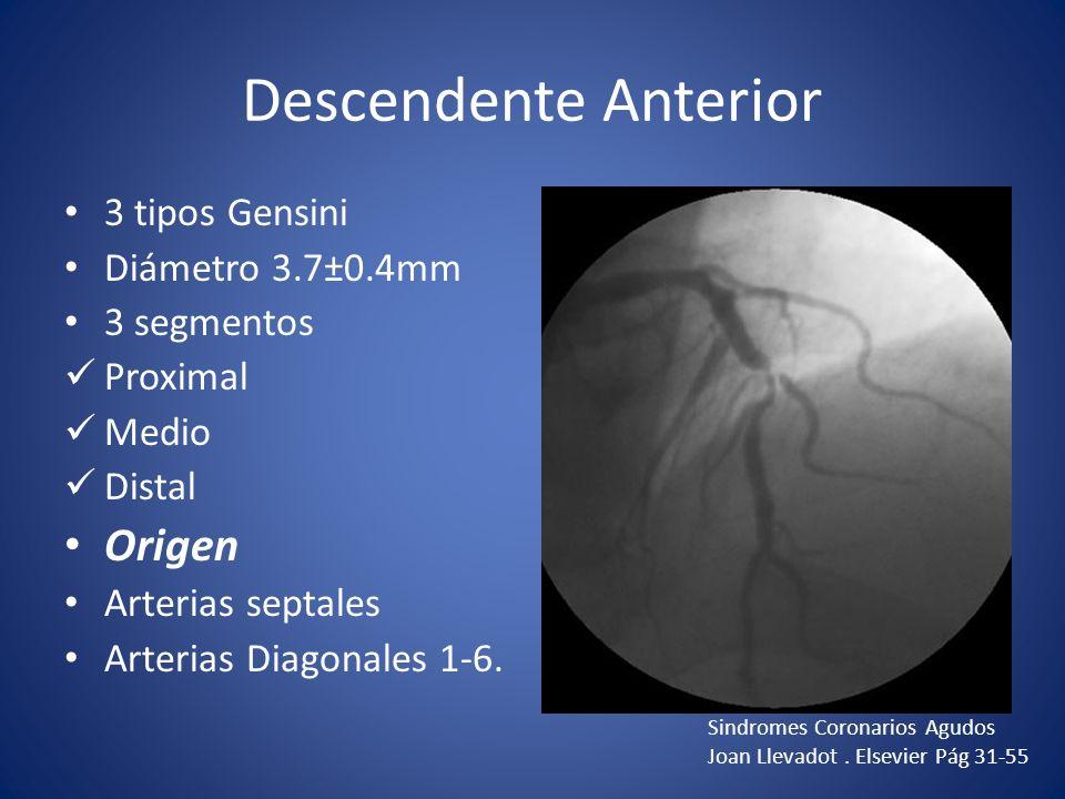 Descendente Anterior Origen 3 tipos Gensini Diámetro 3.7±0.4mm