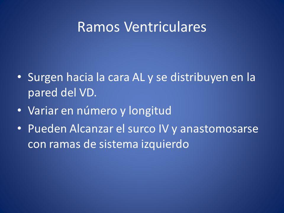 Ramos Ventriculares Surgen hacia la cara AL y se distribuyen en la pared del VD. Variar en número y longitud.