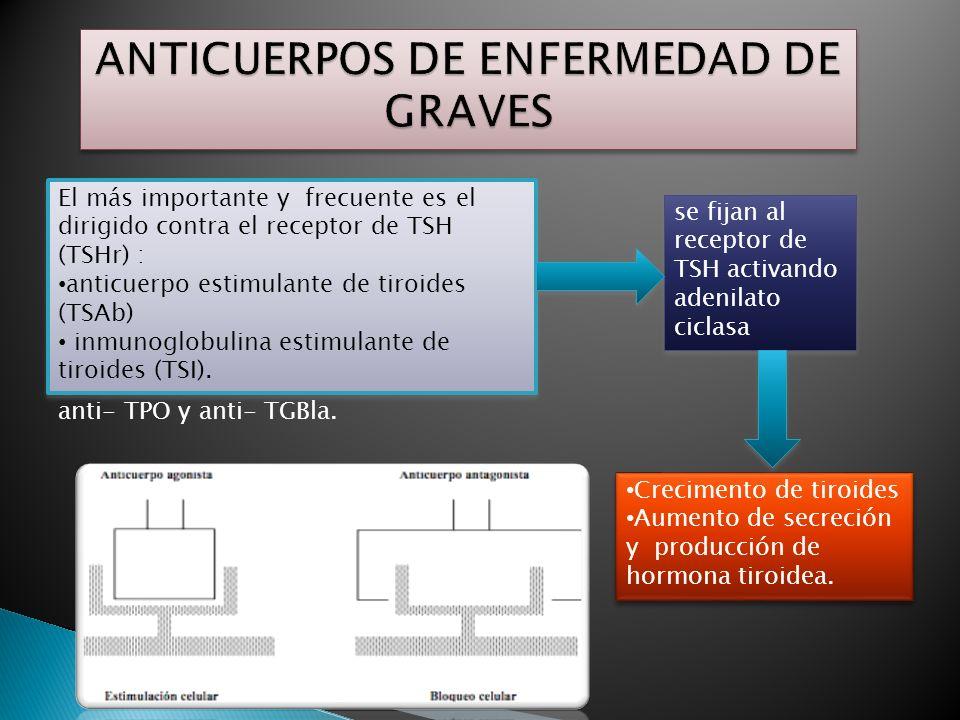 ANTICUERPOS DE ENFERMEDAD DE GRAVES