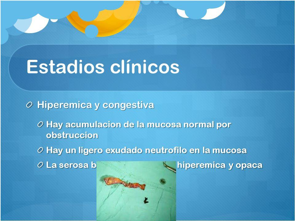 Estadios clínicos Hiperemica y congestiva