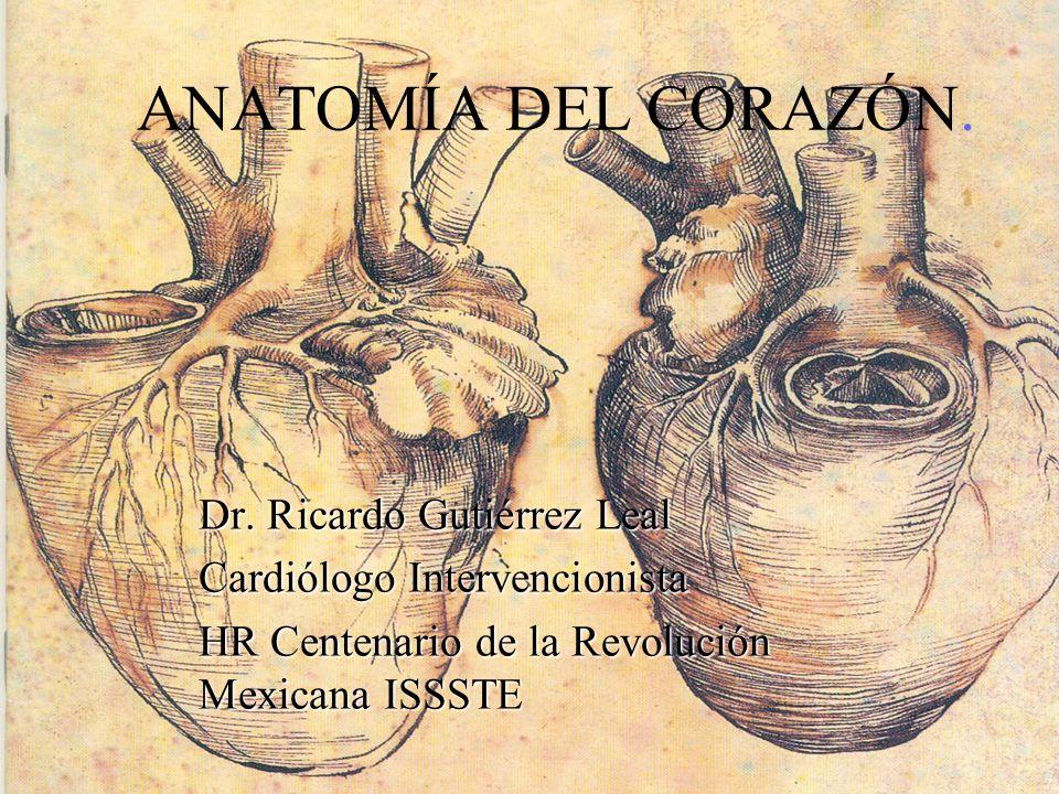 ANATOMÍA DEL CORAZÓN. Dr. Ricardo Gutiérrez Leal