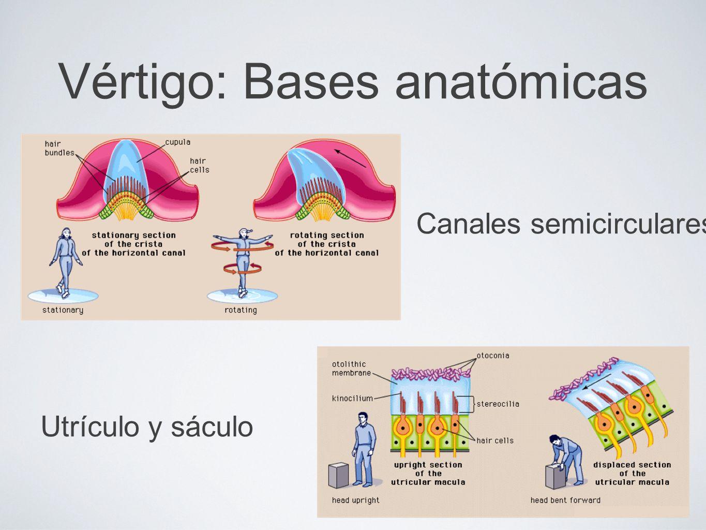 Vértigo: Bases anatómicas