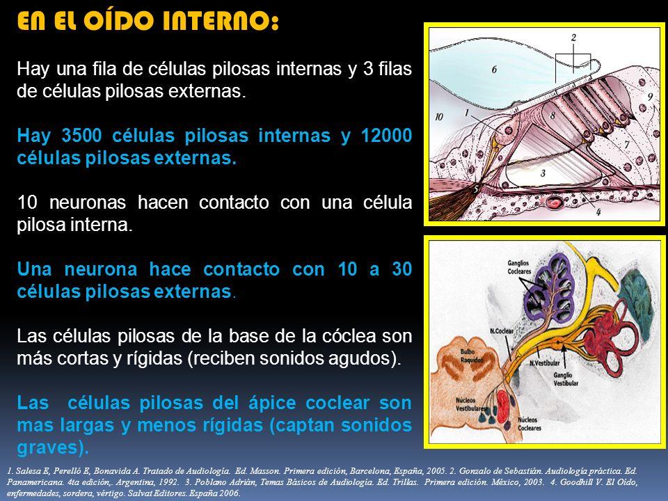 EN EL OÍDO INTERNO: Hay una fila de células pilosas internas y 3 filas de células pilosas externas.