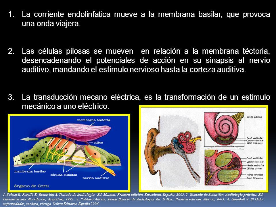 La corriente endolinfatica mueve a la membrana basilar, que provoca una onda viajera.