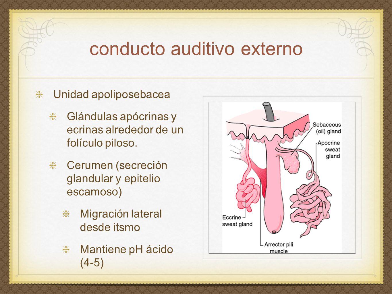 conducto auditivo externo