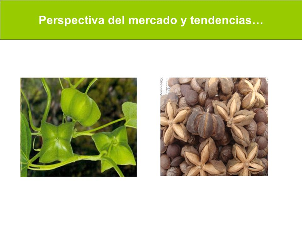 Perspectiva del mercado y tendencias…