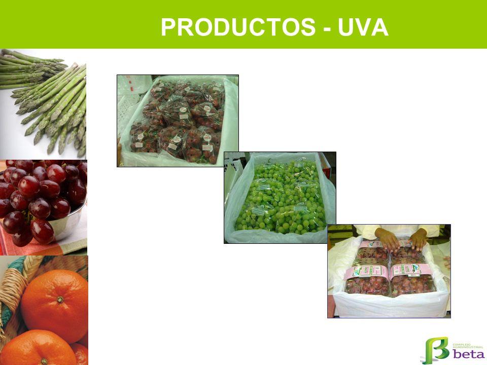 PRODUCTOS - UVA