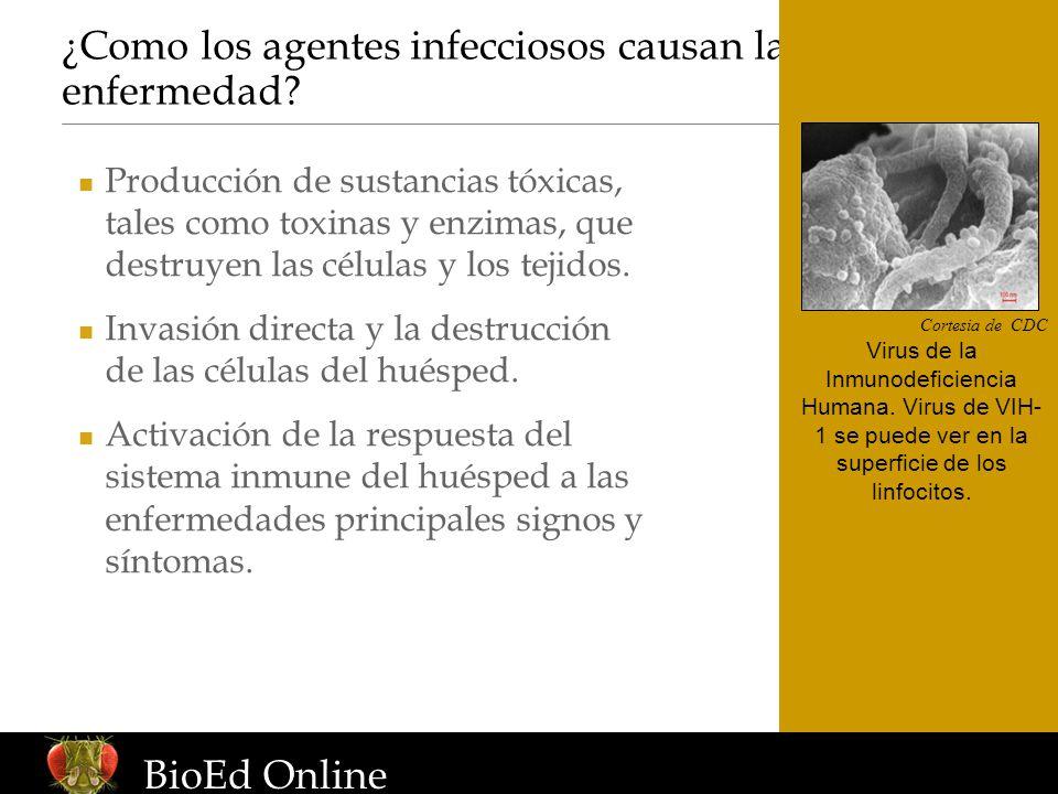 ¿Como los agentes infecciosos causan la enfermedad