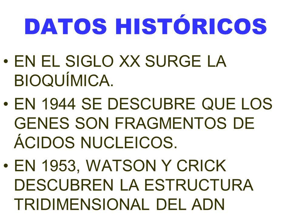 DATOS HISTÓRICOS EN EL SIGLO XX SURGE LA BIOQUÍMICA.