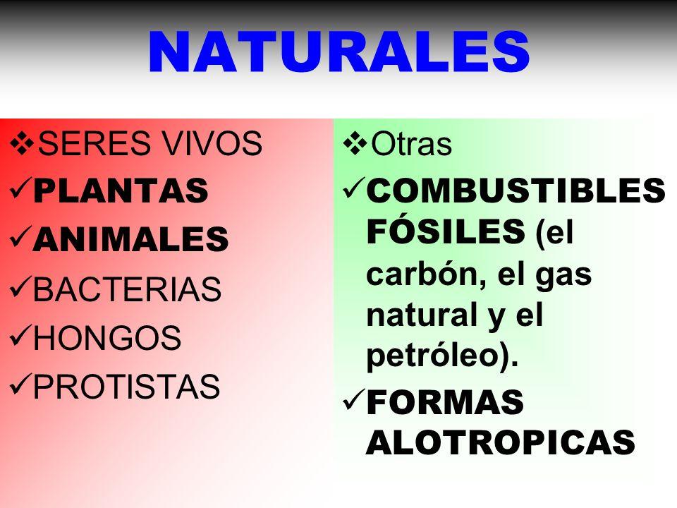 NATURALES SERES VIVOS PLANTAS ANIMALES BACTERIAS HONGOS PROTISTAS