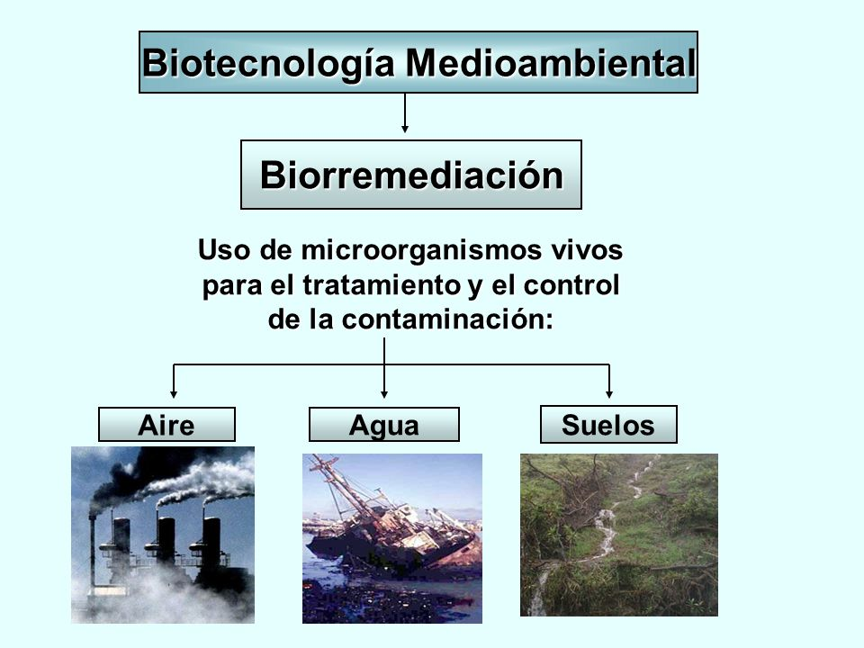 Biotecnología Medioambiental Biorremediación