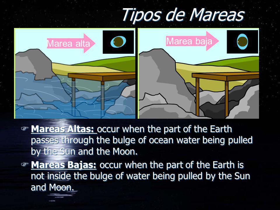 Tipos de Mareas Marea baja Marea alta