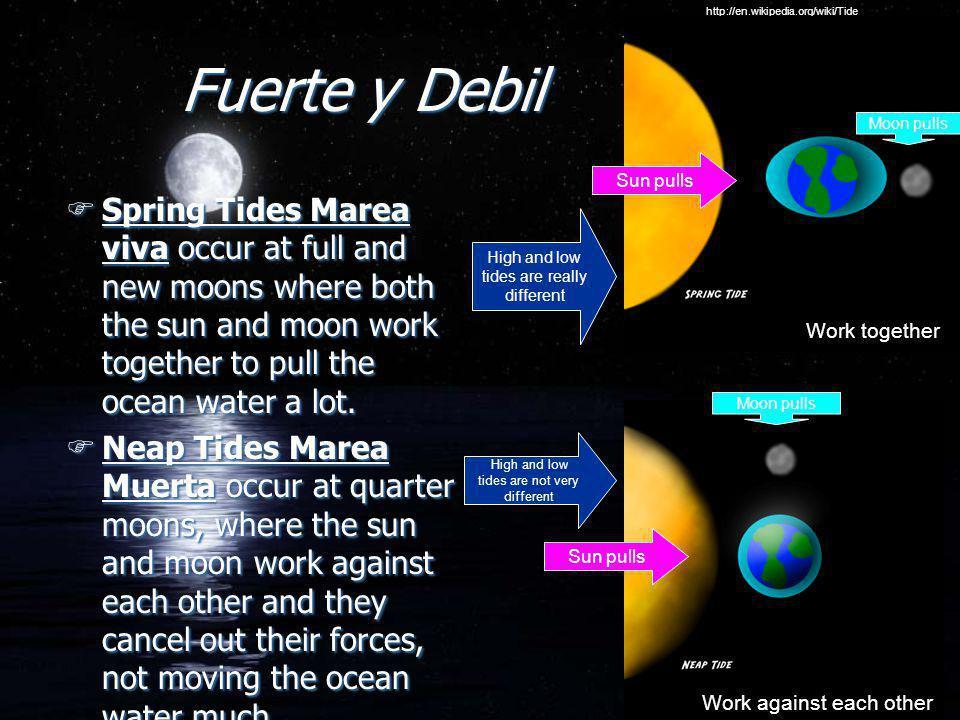 http://en.wikipedia.org/wiki/Tide Fuerte y Debil. Moon pulls. Sun pulls.