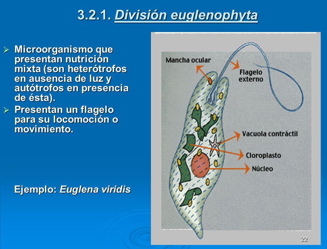 3.2.1. División euglenophyta