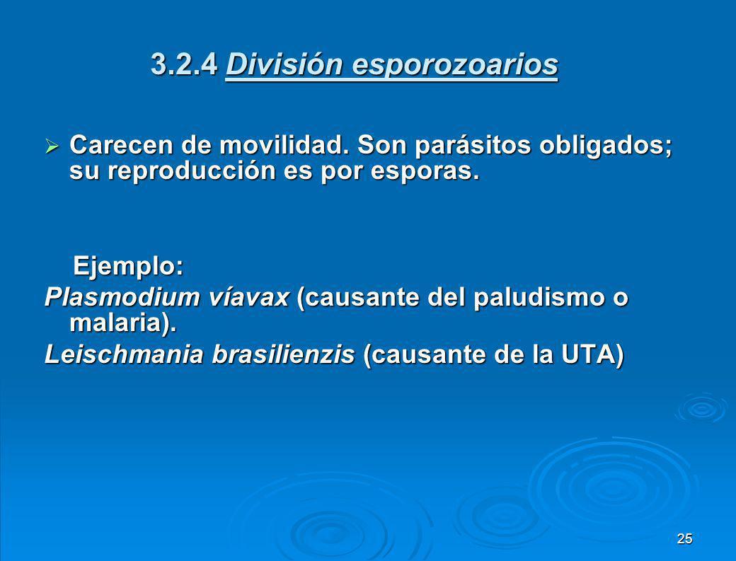 3.2.4 División esporozoarios