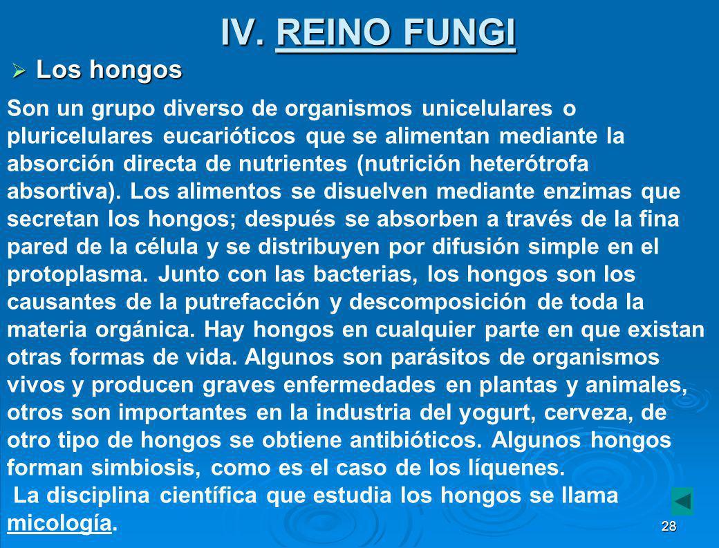 IV. REINO FUNGI Los hongos