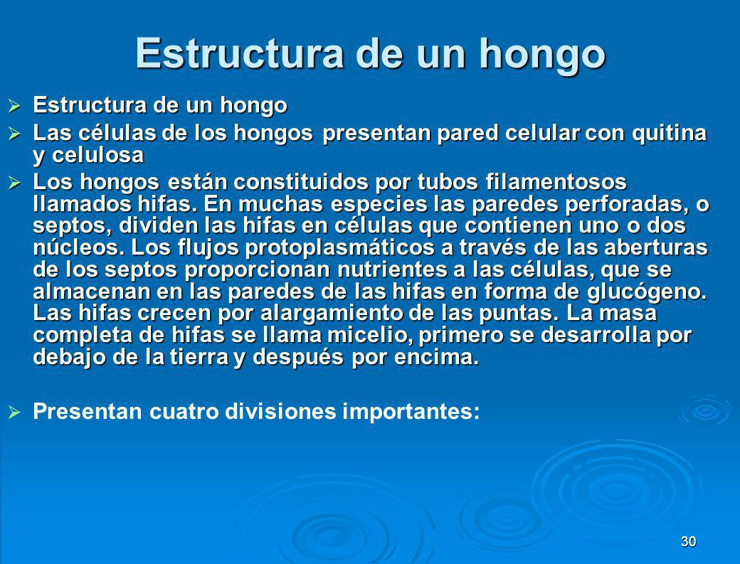 Estructura de un hongo Estructura de un hongo