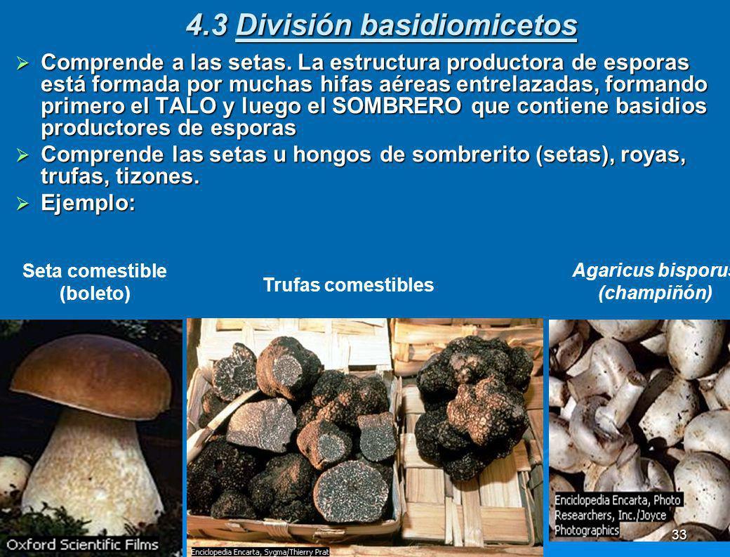 4.3 División basidiomicetos