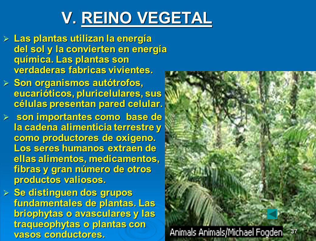 V. REINO VEGETAL Las plantas utilizan la energía del sol y la convierten en energía química. Las plantas son verdaderas fabricas vivientes.