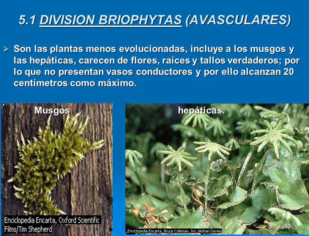 5.1 DIVISION BRIOPHYTAS (AVASCULARES)