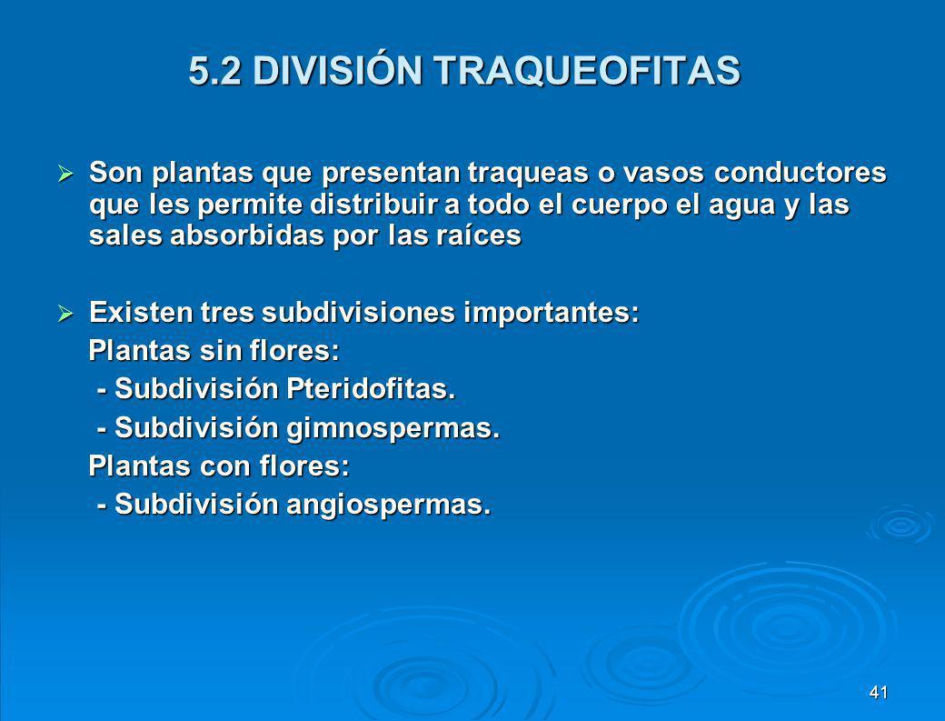 5.2 DIVISIÓN TRAQUEOFITAS