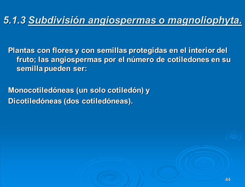 5.1.3 Subdivisión angiospermas o magnoliophyta.
