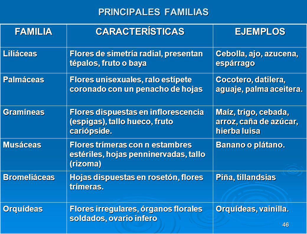 PRINCIPALES FAMILIAS FAMILIA CARACTERÍSTICAS EJEMPLOS