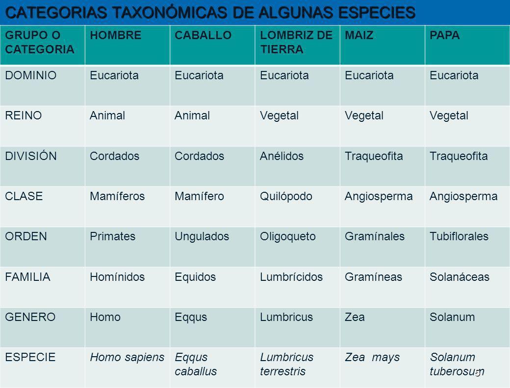 CATEGORIAS TAXONÓMICAS DE ALGUNAS ESPECIES