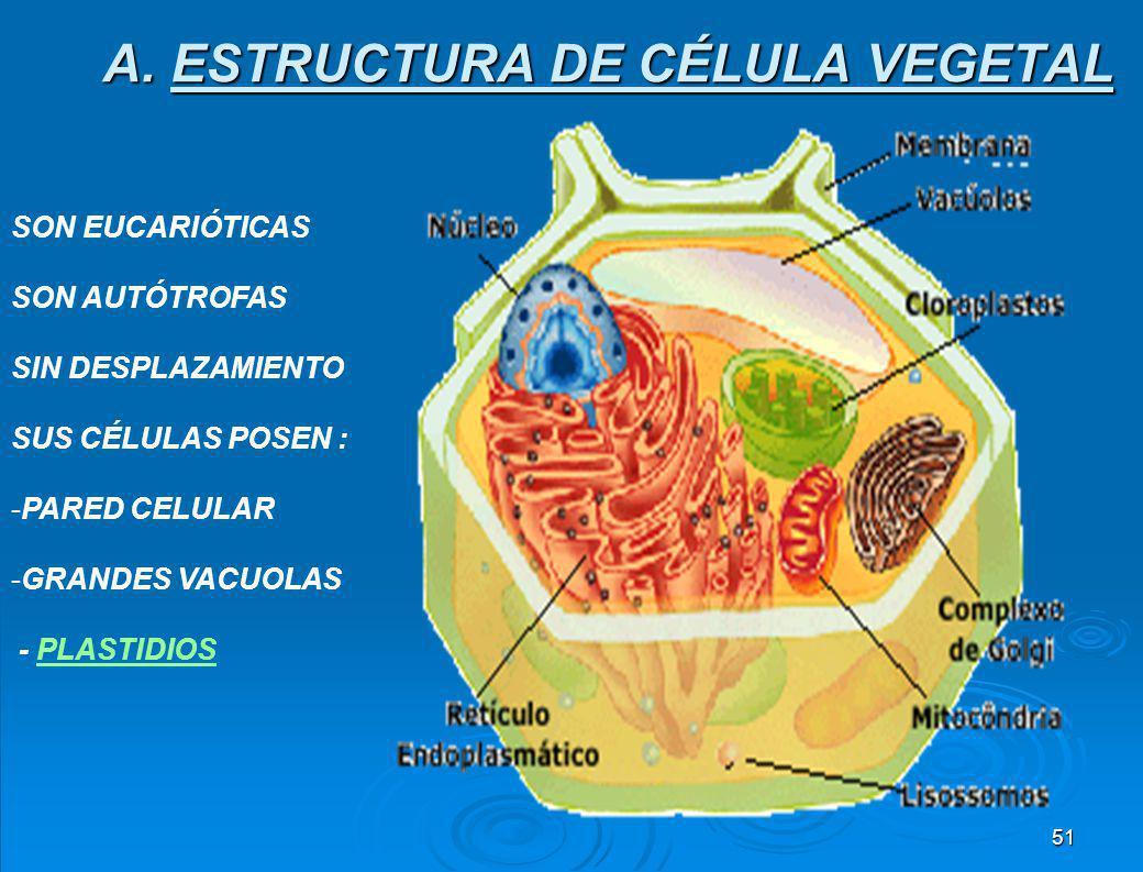 A. ESTRUCTURA DE CÉLULA VEGETAL