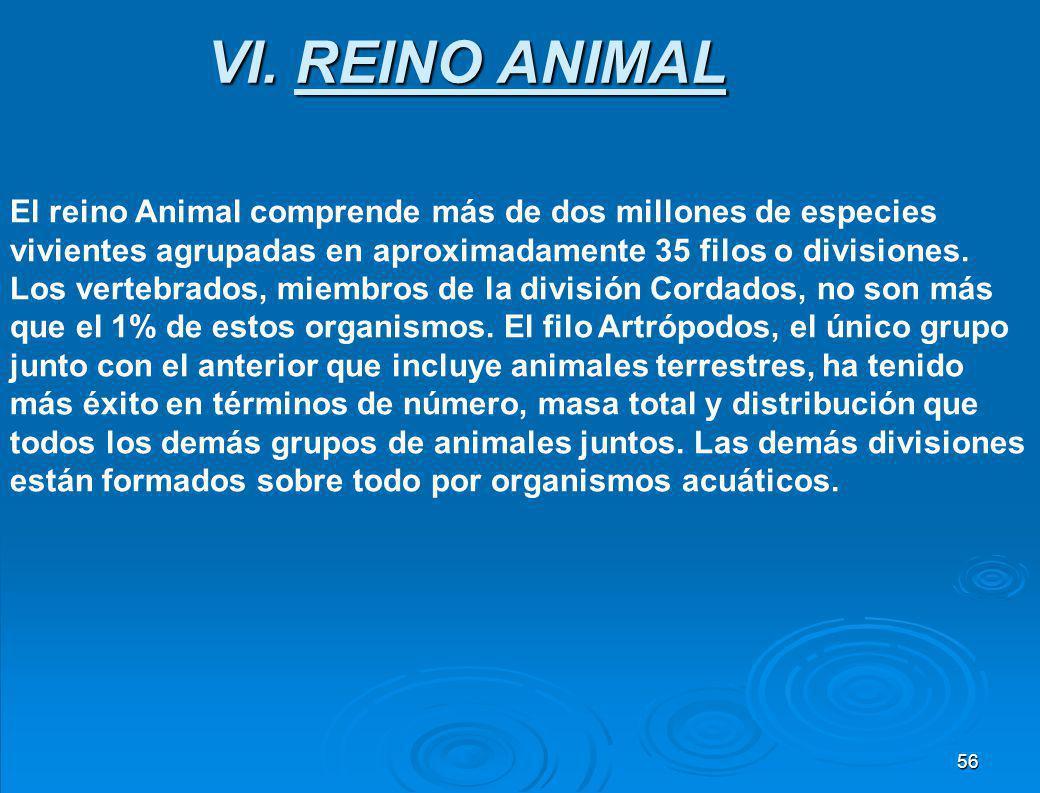 VI. REINO ANIMAL