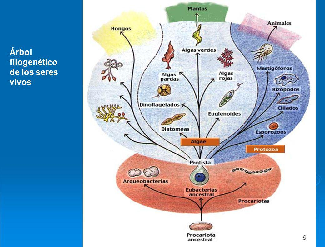 Árbol filogenético de los seres vivos
