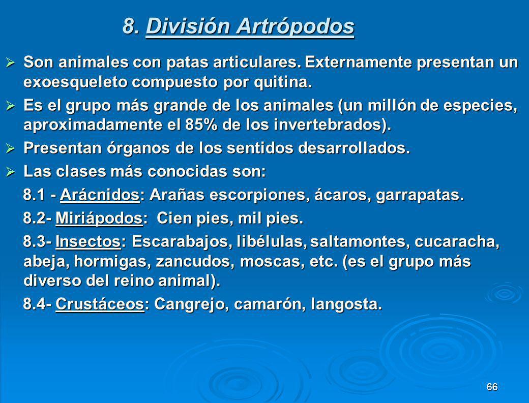 8. División Artrópodos Son animales con patas articulares. Externamente presentan un exoesqueleto compuesto por quitina.