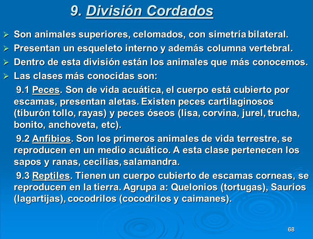 9. División Cordados Son animales superiores, celomados, con simetría bilateral. Presentan un esqueleto interno y además columna vertebral.