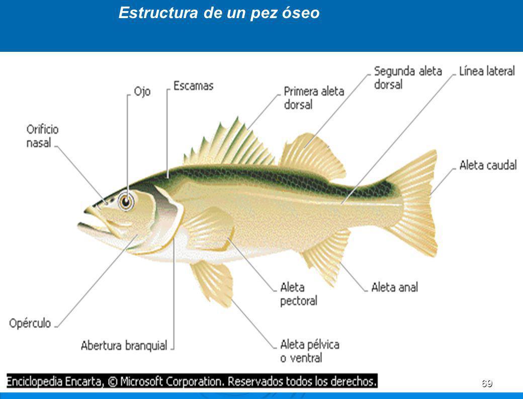 Estructura de un pez óseo