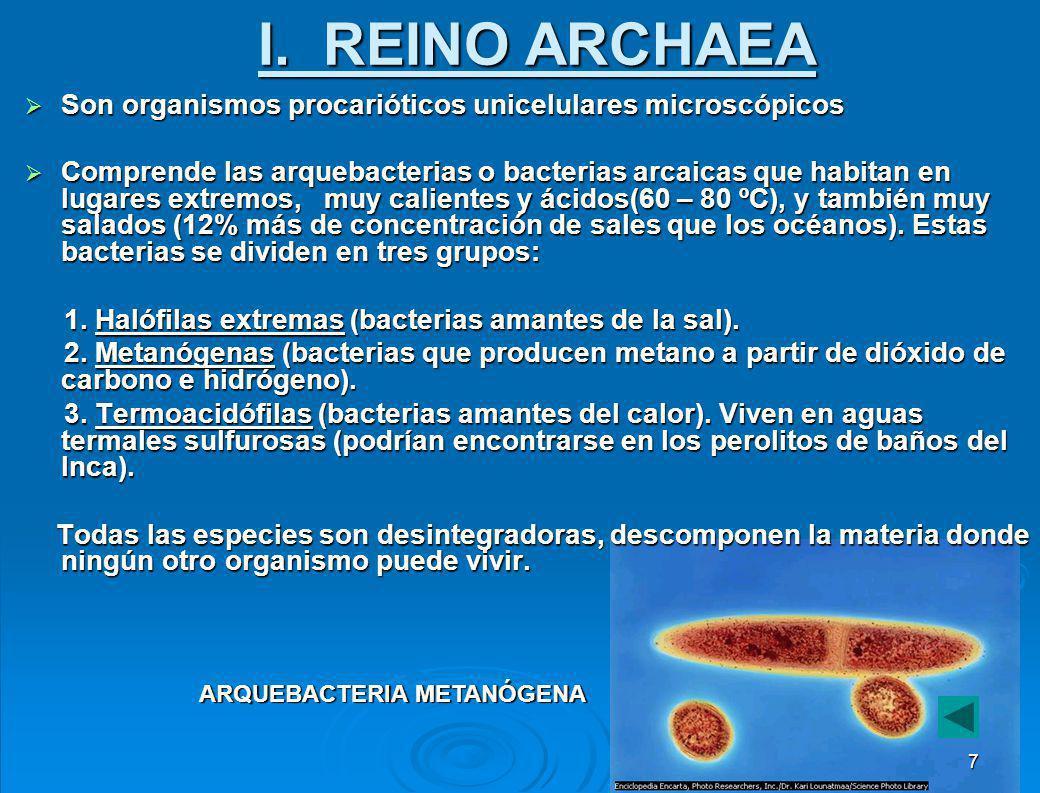 I. REINO ARCHAEA Son organismos procarióticos unicelulares microscópicos.